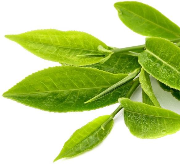 Bathing in Green Tea
